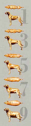 dog weight graphic (14100 bytes)